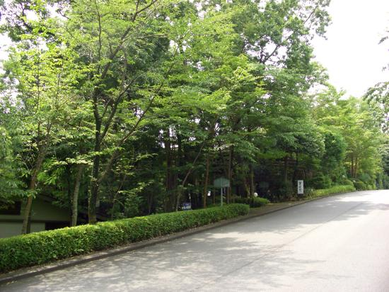 b-hanafubuki-1.jpg