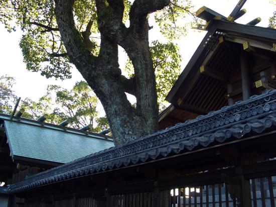 furusato-kani-7.jpg
